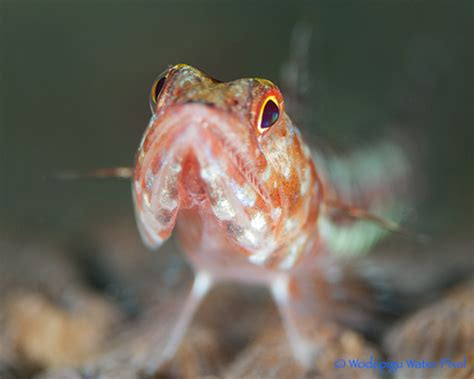 Shallow Depth of Field Underwater|Underwater Photography Guide