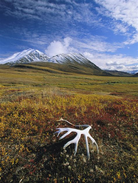 Tundra Threats Information and Facts   National Geographic